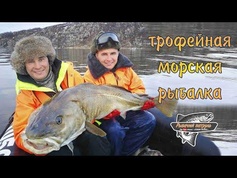 ТРОФЕЙНАЯ МОРСКАЯ РЫБАЛКА / БАРЕНЦЕВО МОРЕ / TROPHY FISHING SALTWATER / BARENTS SEA