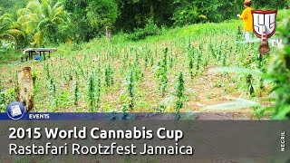 FIRST Jamaican World Cannabis Cup Impressions, Rastafari Rootzfest Negril - Smokers Guide TV Jamaica