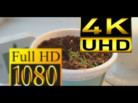 Как улучшить качество видео / как из 1080p сделать 4K в Vegas pro плагин smart upscale ППФ49