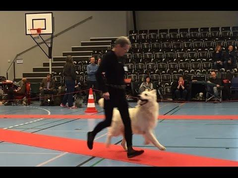 20150405 DKK Dog Show NykøbingF HSH