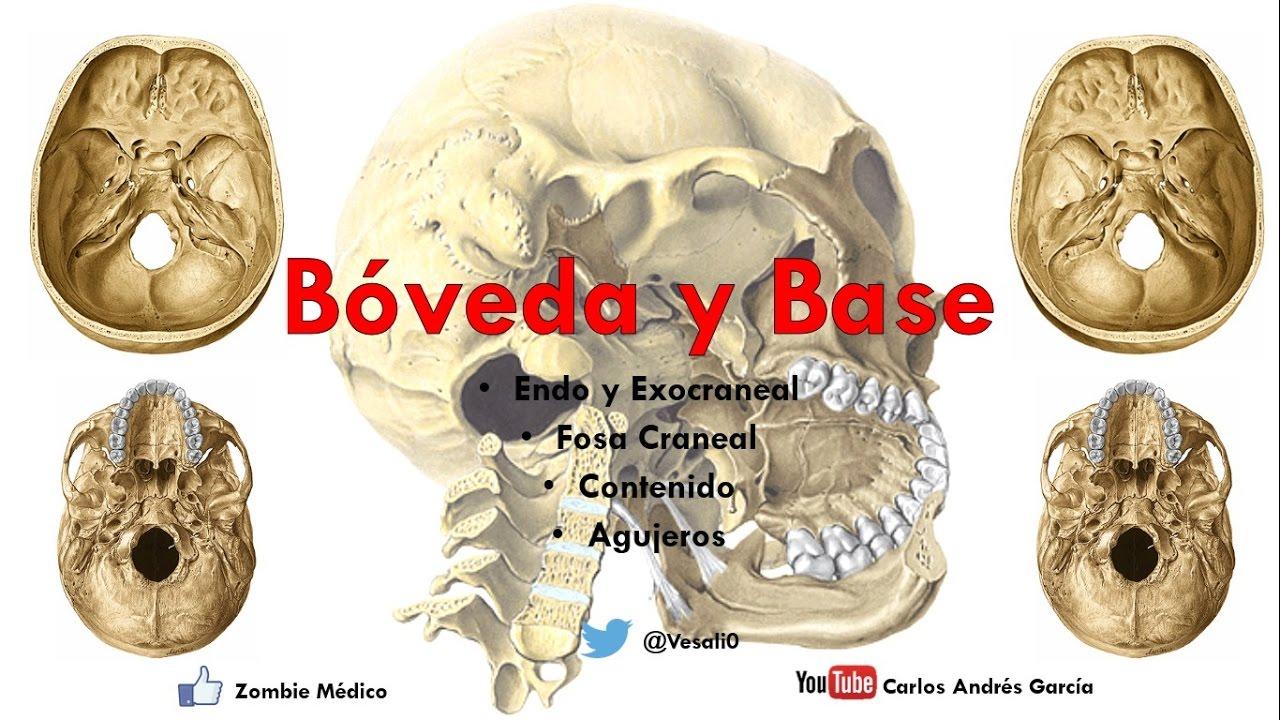 Anatomía - Bóveda y Base del Cráneo (Endo y Exocraneal, Fosas ...