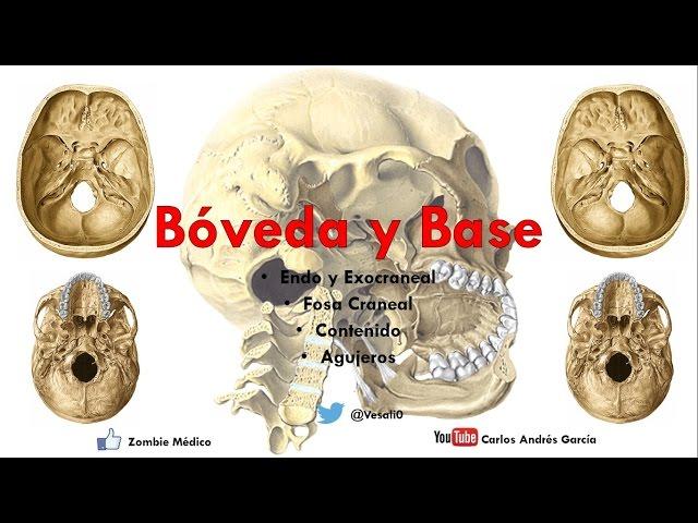 Carlos andres garcia anatomia-boveda y base del craneo endo y ...