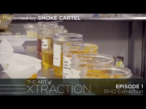 BHO Extraction at Oleum Extracts: The Art of Extraction with Roxy Striar