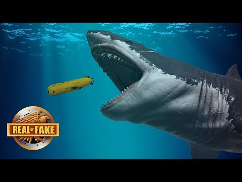 LIVE MEGALODON FOUND IN MARIANA TRENCH - real or fake?