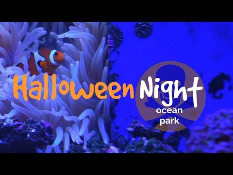 Halloween Party at Chimelong Ocean Park | Zhuhai, China | SviatMe