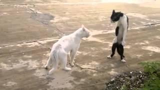 Говорящие коты прикольное видео
