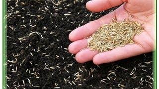 Посев газона(Прежде чем сеять семена травы, нужно провести комплекс подготовительных работ. Выбранный для газона участо..., 2014-01-23T17:35:48.000Z)