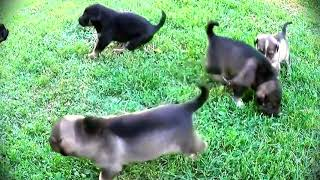 Смешные маленькие собачки  - Щенки играют гуляют