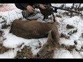 Roe Deer Hunting /Thompson T/C Encore .308 Win/ Hornady Precision Hunter
