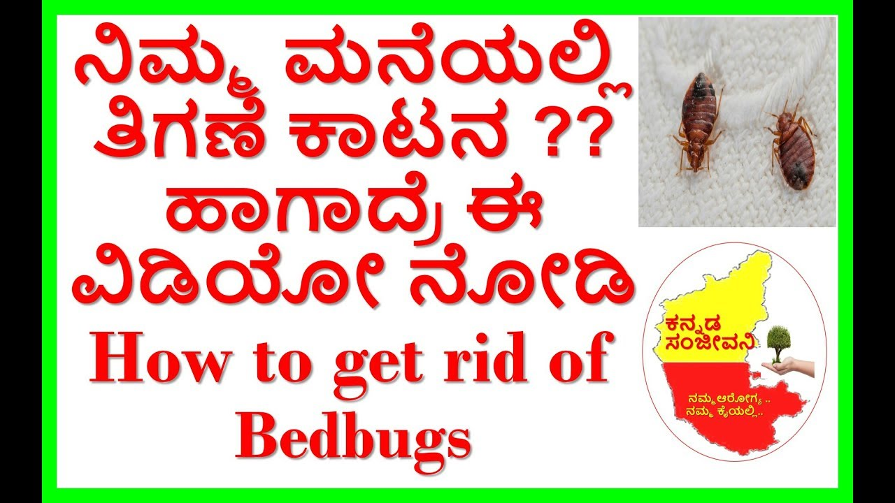How To Get Rid Of Bed Bugs Naturally Kannada Sanjeevani Youtube
