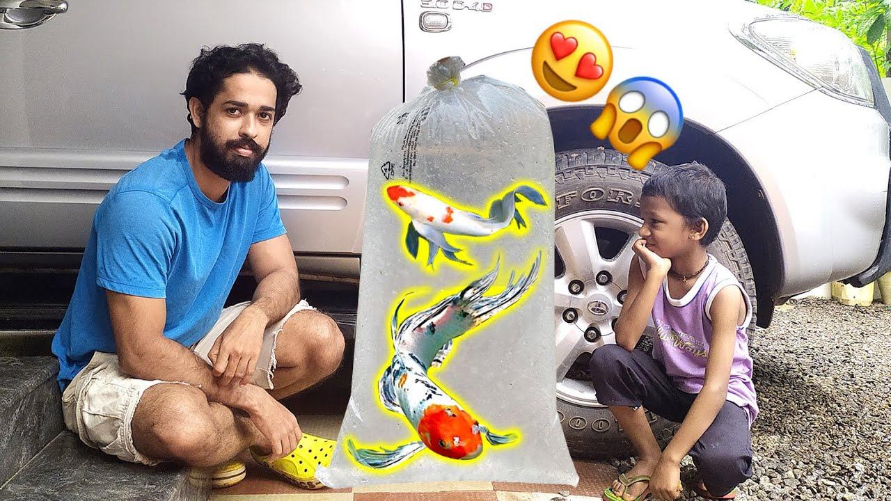 2,000/- രൂപയുടെ നാലു മീനുകളെ മേടിക്കാൻ പോയപ്പോൾ!! | Bought four new Koi carp fantail Kerala