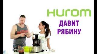 Hurom Alpha HZ - жмем сок из черноплодной рябины.
