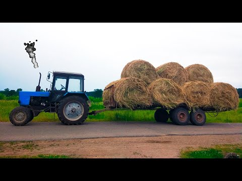 Синий Трактор везет в прицепе Сено и едет на Ферму