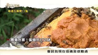 【農藥危害 蜜蜂死亡之謎】2017.10.20 華視新聞雜誌預告