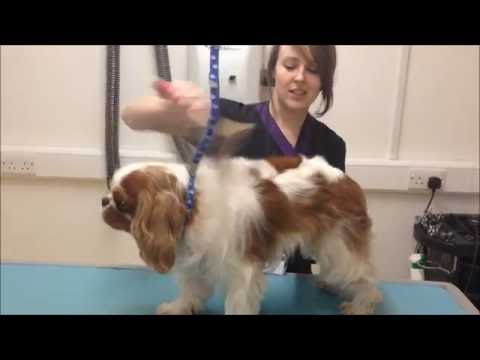 How to: Brush your Dog at Home