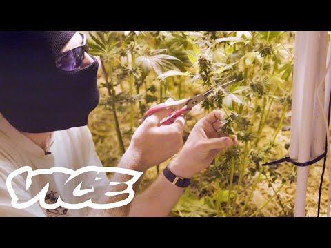 Australia's Underground Medicinal Marijuana Growers
