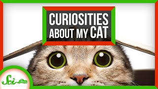 Your Cat Questions Answered! | Compilation