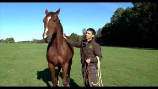 J'éduque mon cheval N°7: attraper son cheval au pré