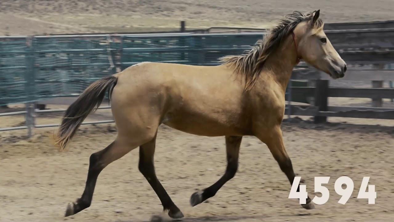 Wild horse online adoption, June 2018
