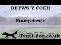Betws Y Coed - Stumpdance