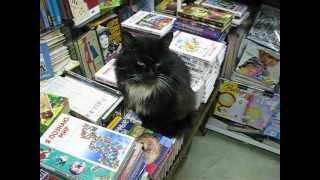 ПРИЖИЛСЯ В КНИЖНОМ черный кот- его назвали Бегемот ч.1