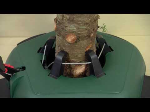 How to Set Up a Real Christmas Tree  – Ace Hardware