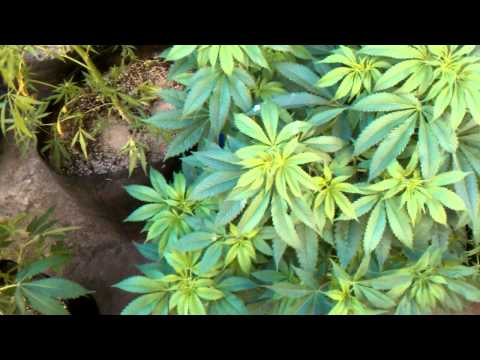 Organic grower Vs Chem Grower: Get ready for darkness
