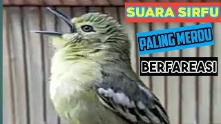 Download Lagu SUARA SIRFU PALING MERDU BANYAK FAREASI mp3