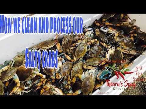 How we clean and process Salty Crabs