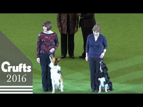 Obedience Winners | Crufts 2016