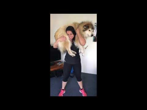 Squatting Doggos