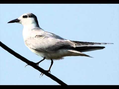 Salim Ali Lake & Bird Sanctuary attractions city