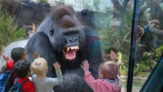 Дети и дикие животные - настоящее зоо тропических лесов.  Животные и африканских животных!