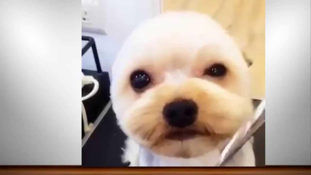 So cute video Haircut for cute puppy