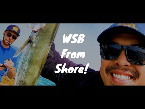 Fishing For Juvenile White Sea Bass From Shore In Redondo Beach, Southern California