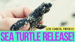 Baby Sea Turtle Release!