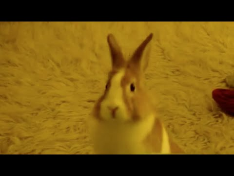 Bunny does a 180° while Binkying