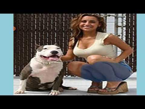 Video Lucu Anjing Minta Kawin