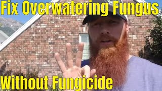 DIY How to Fix Overwatering fungus without fungicide application. Melting Out & Leaf spot fix.