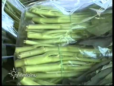ทุกทิศทั่วไทย ปลูกผักคะน้า