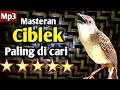 Masteran Ciblek Paling Di Cari  Mp3 - Mp4 Download