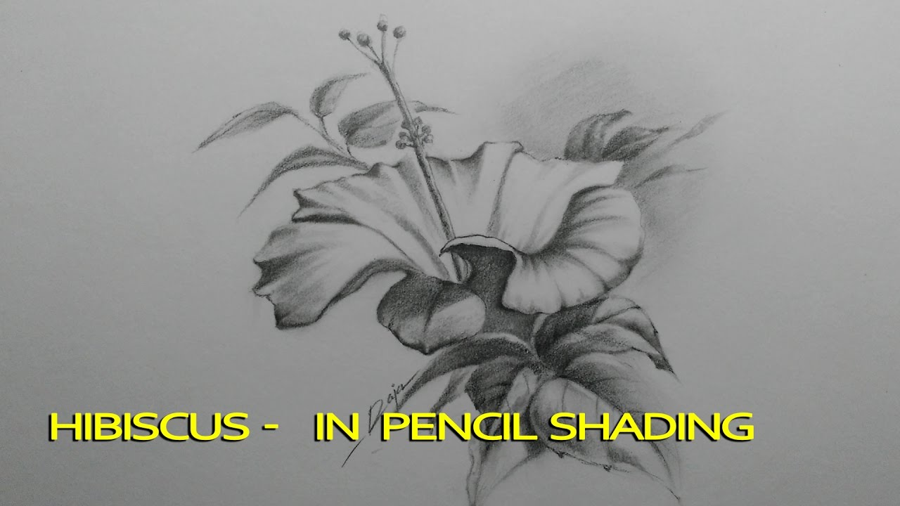 Hibiscus In Pencil Shading Step By Step Smudging Youtube