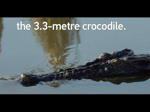 Croc kills Australian at dangerous river crossing