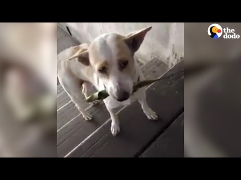 Stray Dog Brings Gifts To Woman Who Feeds Him | The Dodo