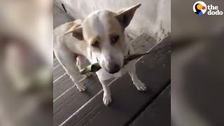 Stray Dog Brings Gifts To Woman Who Feeds Him   The Dodo