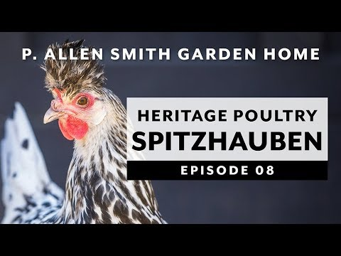 Heritage Poultry Appenzeller Spitzhauben Garden Home Vlog 2019 4k
