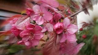 Vivaldi- Spring - Allegro