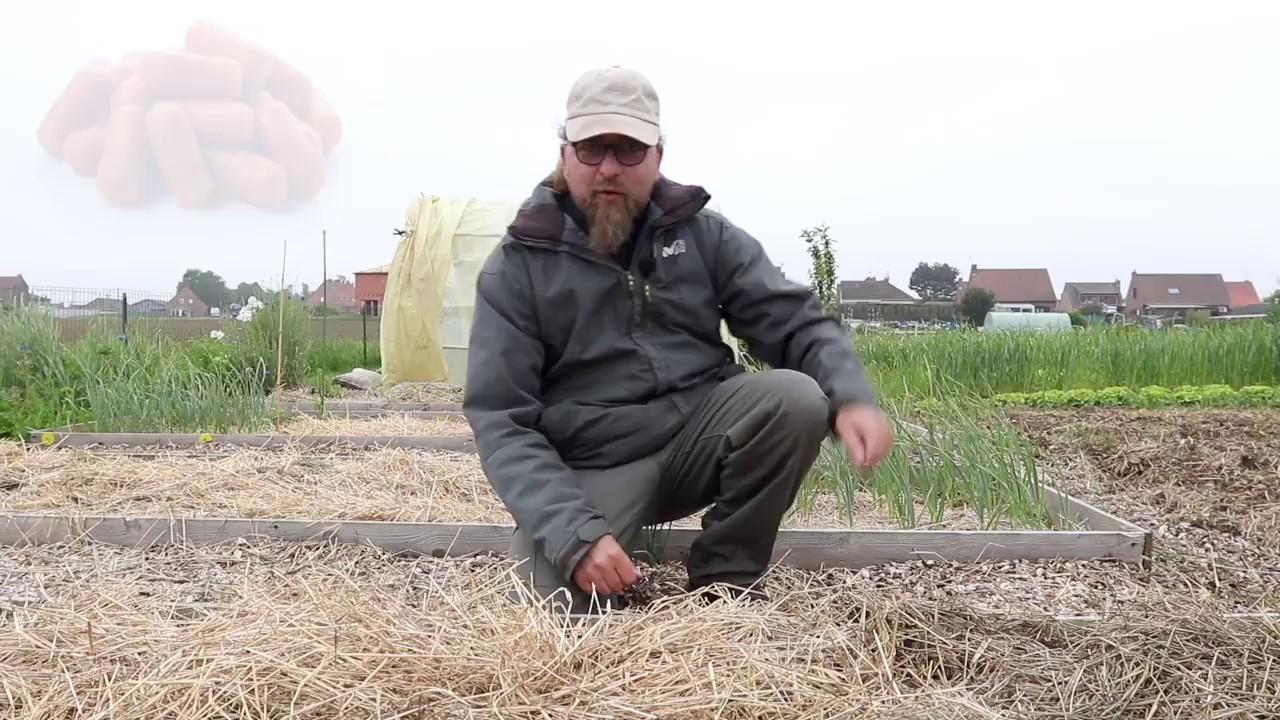 Episode 37 : Plantations des tomates et autres précisions ...