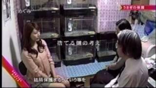 日本うさぎ愛護協会.