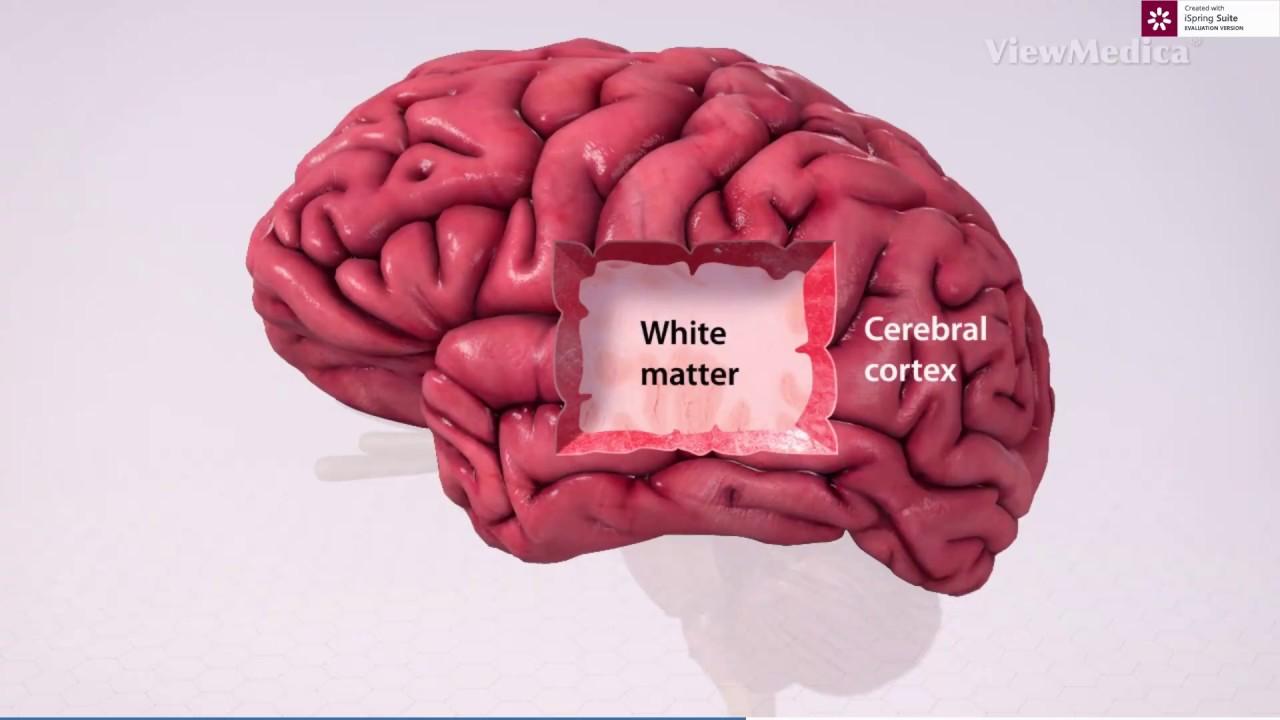 creierul este partea responsabilă cu vederea